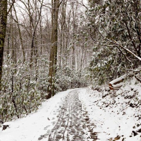 If you are looking for some great Tennessee Winter Bucket List activities to put on your radar, look no further than these great suggestions! #TennesseeTravel #WinterinTennessee #TennesseeTravelGuide #VisitTennessee
