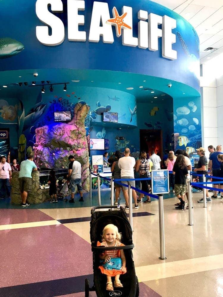 Sea Life in Orlando