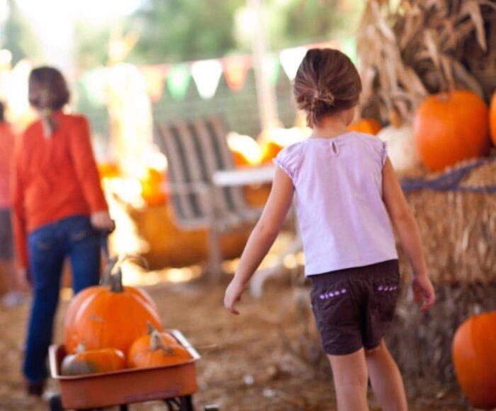 best pumpkin patches in georgia