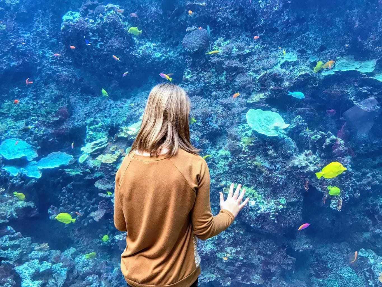 Georgia Aquarium, LifeFamilyFun.com
