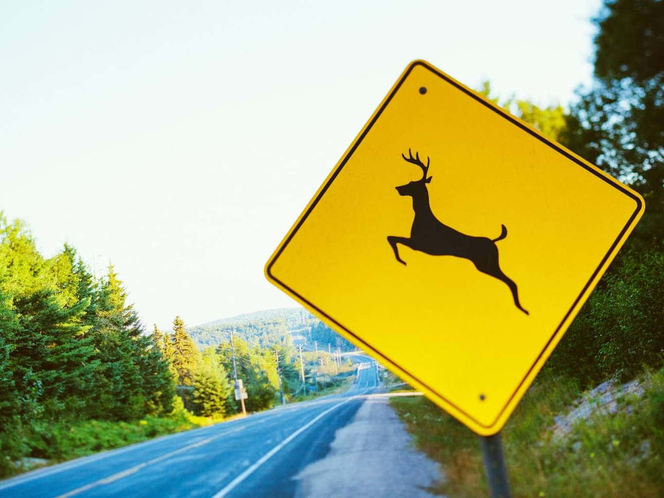 Fall Safety Driving Tips, Deer Crossing