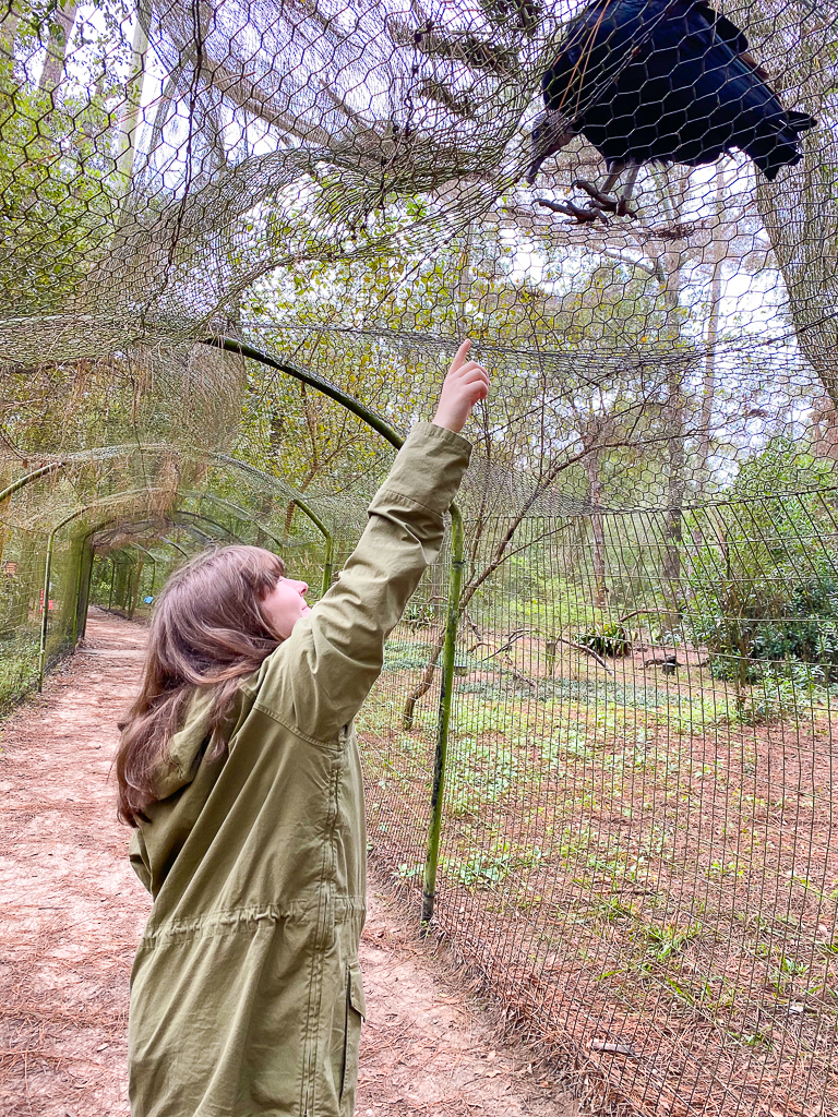 Tallahassee Museum, Things to do in Tallahassee