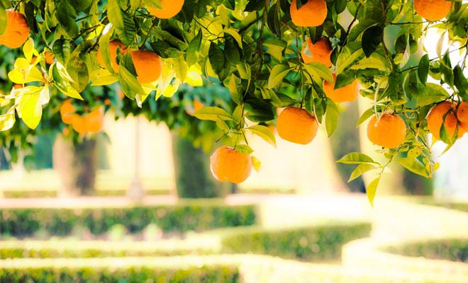fun family games Big Dangly Oranges
