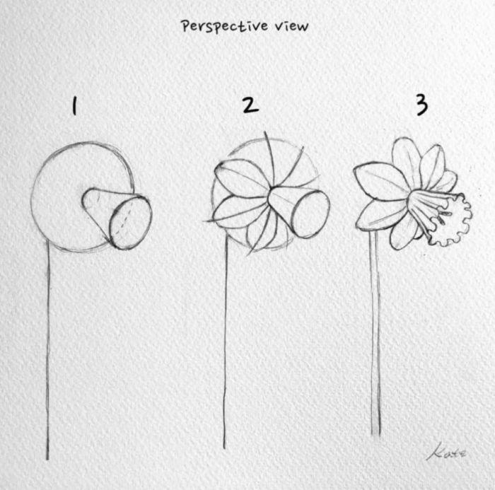 Daffodil drawing flower