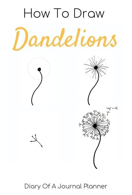 how to draw Dandelion