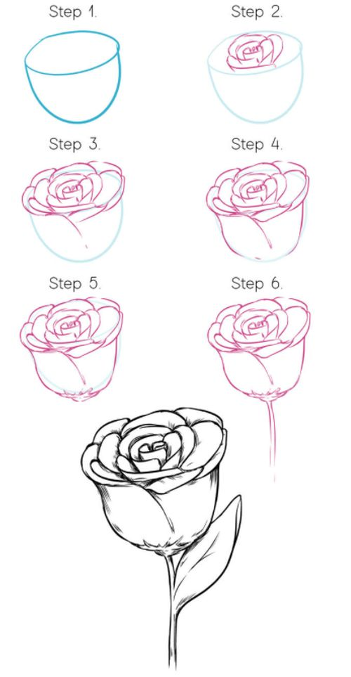 Tips to draw Roses