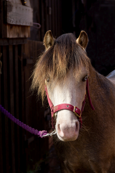 Best Horse and Pony Breeds for Kids